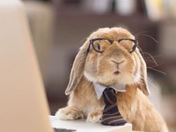 business rabit